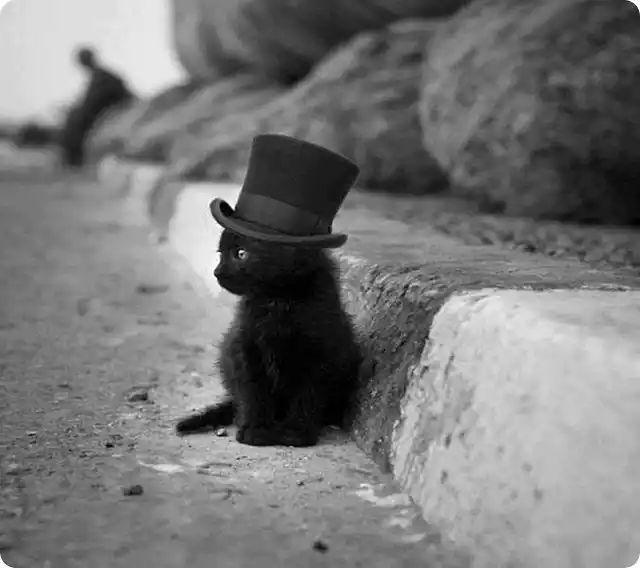 cute black kitten with top hat - black Cute hat Kitten top