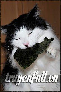 Rong Biển Bị Mèo Ăn